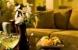 Room - Suite: Hotel CROWNE PLAZA MEMPHIS Zone: Memphis (Tn) United States